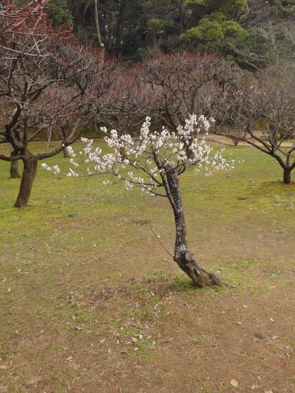 blog_photo001 164