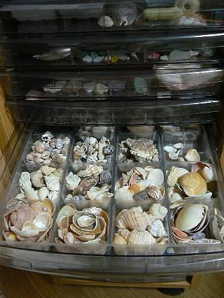 引き出し貝