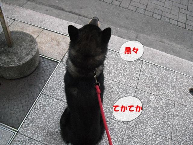 CIMG2108_20110107204556.jpg