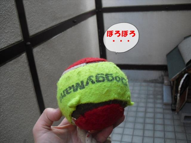CIMG4117.jpg