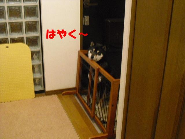 CIMG4339.jpg