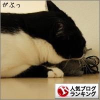 dai20141110_banner.jpg