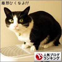 dai20141119_banner.jpg