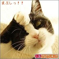 dai20141127_banner.jpg