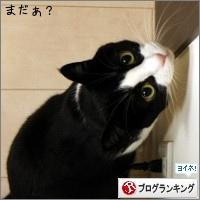 dai20141128_banner.jpg