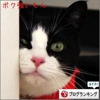 dai20141209_banner.jpg