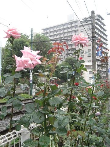 1022OTSUKA1.jpg