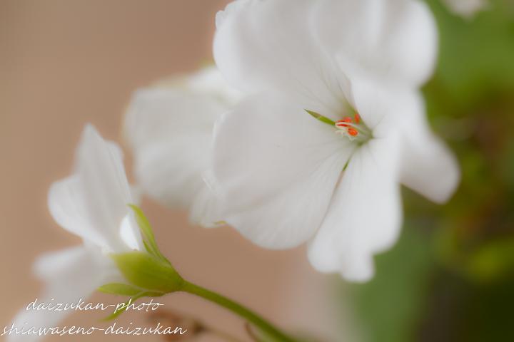 daizukan-photo-6599.jpg