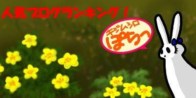 キジムシロ20141121