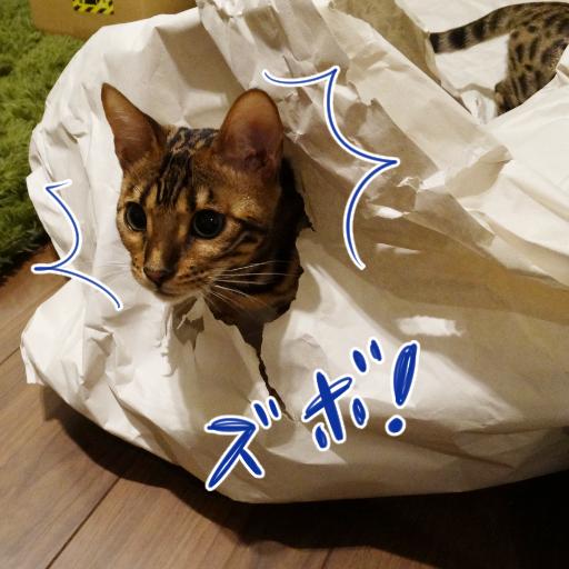 20141027_05.jpg