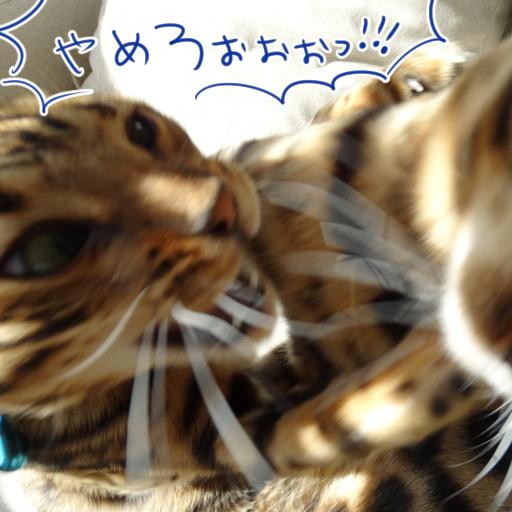 201412011b_09.jpg