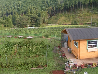 農園の夏景色