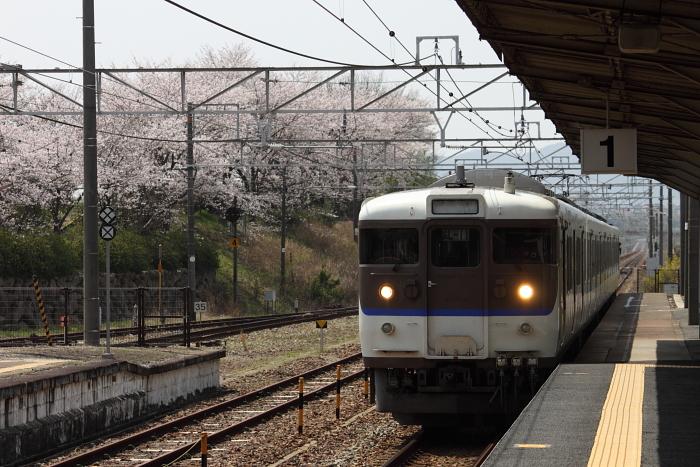 乗車する広L‐11編成と桜