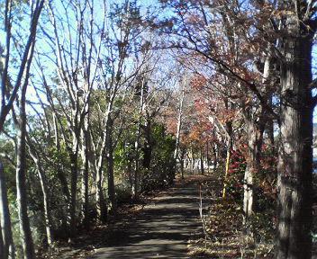 20111205南ヶ丘遊歩道