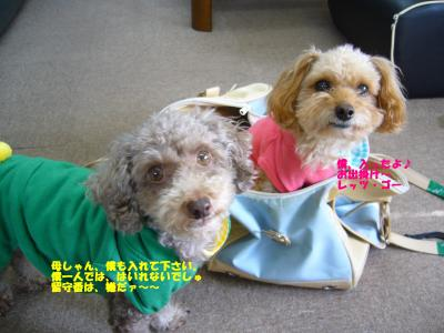 convert_20111018143915.jpg