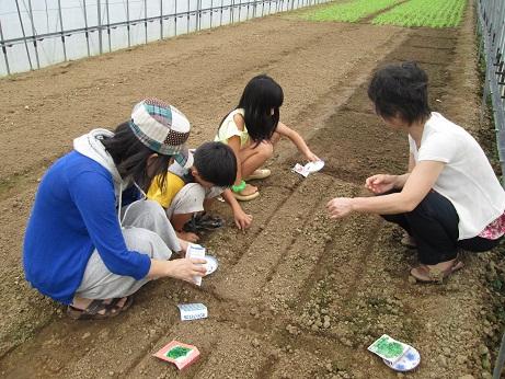 秋野菜を植えよう2
