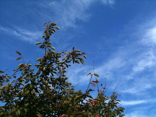 10月の秋空
