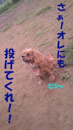 20110505-9(セリフ)
