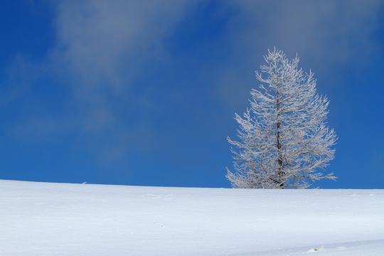 2011.01.10-樹氷-11