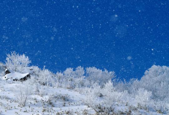 2011.01.10-樹氷-02
