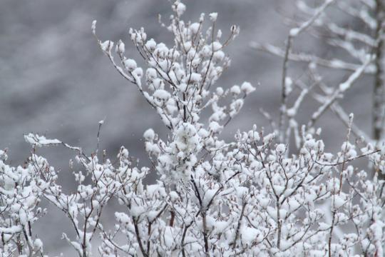 2011.04.25-雪-004