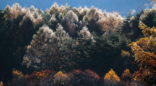 2011.10.26-氷の紅葉-03