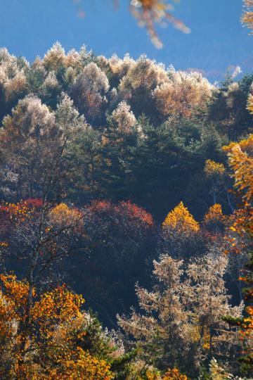 2011.10.26-氷の紅葉-02