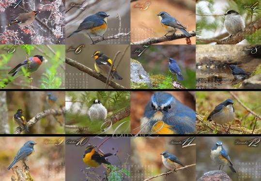 2012.野鳥カレンダー-完成版-
