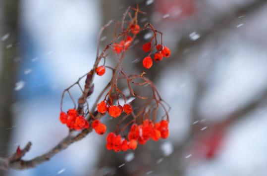 2012.01.04-雪-4
