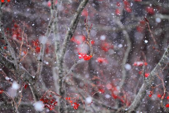 2012.01.04-雪-3
