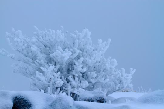 2012.01.05-霧氷-5