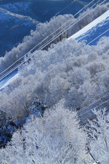 2012.01.24-霧氷-24