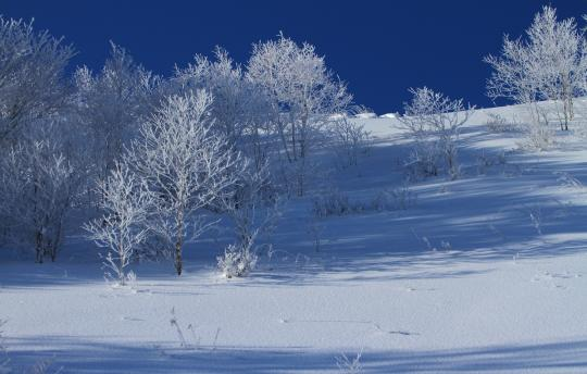 2012.01.29-霧氷-9