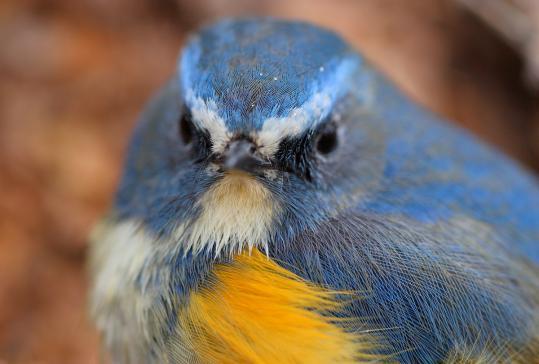野鳥2011.05.02-鷽-7 (45)