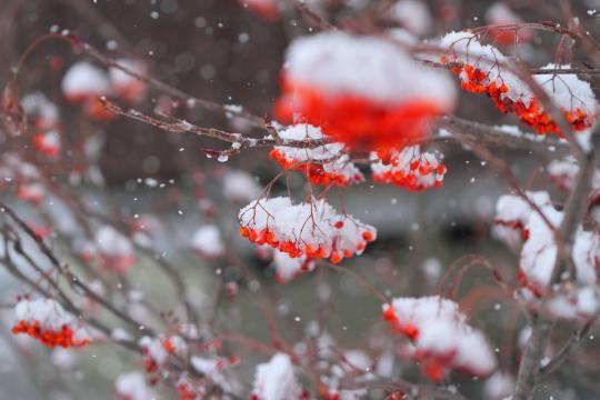 2012.02.26-雪-7