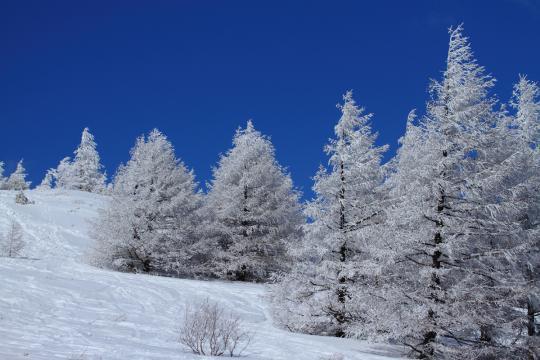 2012.02.27-霧氷-4