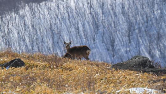 2012.03.21-鹿-24