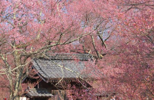 2012.04.19-高遠-29