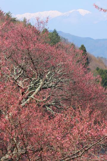 2012.04.19-高遠-30