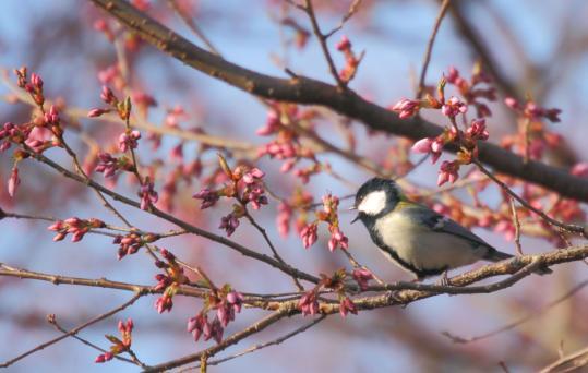 2012.04.19-高遠-5