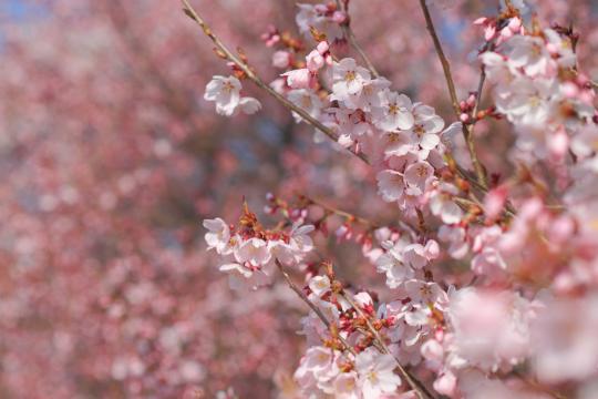 2012.04.19-高遠-4
