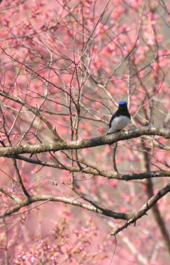 2012.04.19-高遠-1