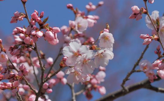 2012.04.19-高遠-36