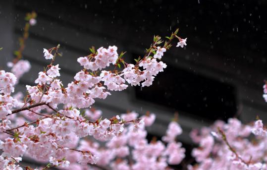 2012.04.23-高遠-22