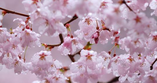 2012.04.23-高遠-37
