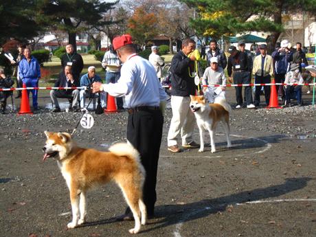 11月 秋田犬展覧会 4