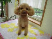 005_convert_20110612200425.jpg