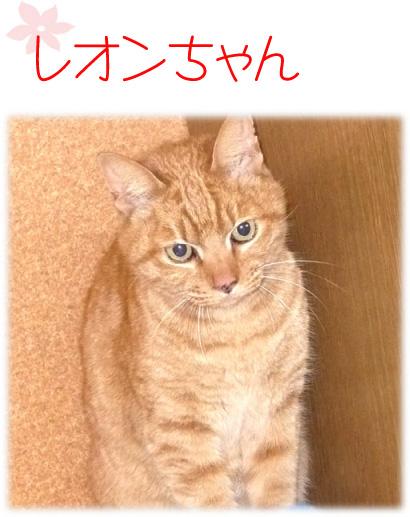 猫 レオンちゃん