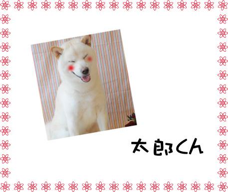 柴犬 太郎くん2