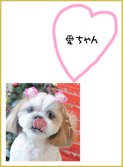シーズー 愛ちゃん3